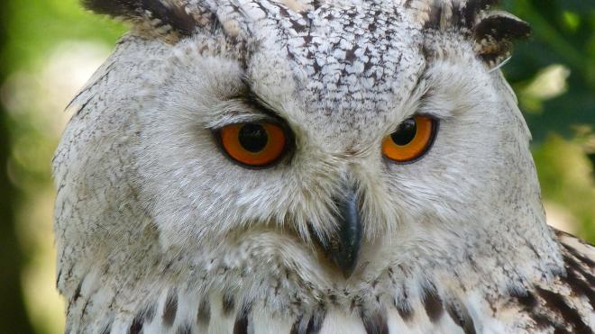 В Петергофе сову спасли от принудительной фотосессии