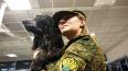 Петербуржцы будут штурмовать границу Финляндии и Эстонии...