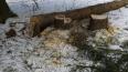 Петербуржцы возмущены вырубкой деревьев в Ржевском ...
