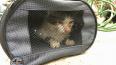 Петербургские спасатели выловили кота из Мойки