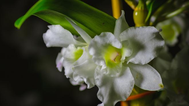 В Ботаническом саду зацвели орхидеи