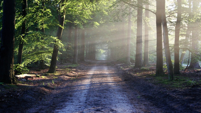 В лесу Петербурга откопали чемодан с окровавленной женщиной