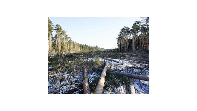 Двое защитников Цаговского леса задержаны полицией