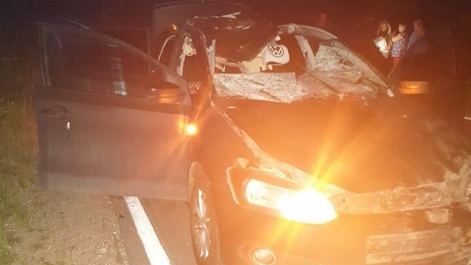 Машина сбила лося под Киришами
