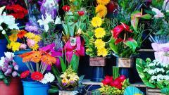 Поставщик цветов в Петербурге просит взыскать почти 4 млн рублей с компании-покупателя