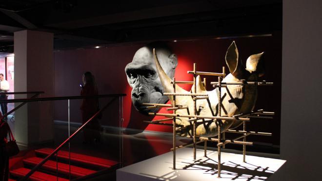 Итальянский художник Стефано Бомбардьери — о своей первой выставке в России