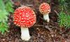 Роспотребнадзор: петербуржцы перестали есть несъедобные грибы