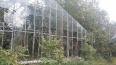 В заброшенных теплицах Таврического сада может появиться ...