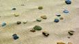 Петербургские пляжи станут объектами благоустройства
