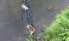 В прудах реки Новой несколько суток не убирают тушки мертвых уток