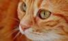 Стало известно, как в Петербурге празднуют Всемирный день кошек