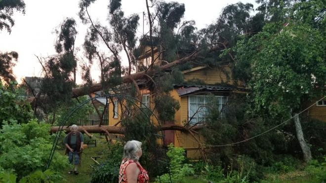 В поселке Мельничный Ручей Ленобласти люди сами убирают поваленные деревья