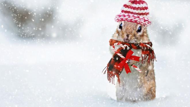 В пятницу петербуржцам придется терпеть снег и дождь