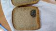 Находка века: в Петербурге в хлебе был запечён подшипник