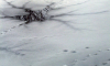 В Петергофе мужчины провалились под лед, выжить удалось лишь одному из них