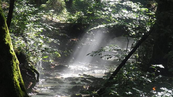 В лесах Ленобласти за лето спасатели нашли 90 человек