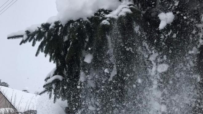Месячная норма снега может выпасть в Петербурге за праздничные дни