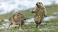 """""""Момент"""": Названа самая лучшая фотография дикой природы ..."""