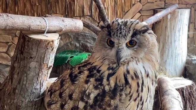 Прием даров осени для животных открыли в Ленинградском зоопарке