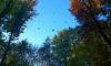Петербуржцев предупреждают о ливнях и сильном ветре в среду