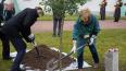 У Ратной палаты посадили черешчатый дуб, который будет р...