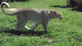 Шесть видов животных находятся под угрозой исчезновения ...