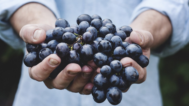 В Шушарах со склада изъяли 4 тонны зараженного винограда