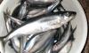 Рыбаки Петербурга продают корюшку на Avito