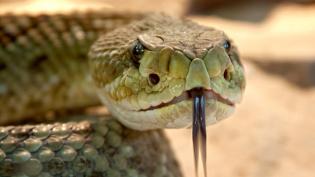 Ядовитая змея напала на собаку в Кировском районе