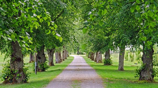 В Полюстровском парке посадили сто лип в честь 100-летия Уголовного розыска