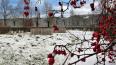 Балканское воинское кладбище приведут в порядок к ...