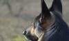Французские полицейские пожертвовали служебным псом ради успеха операции в Сен-Дени