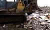 Петербуржцы возмущены уничтожением 26 тонн санкционного сыра