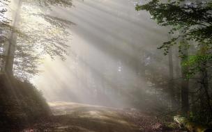 Утром четверга в Ленобласти ожидается туман