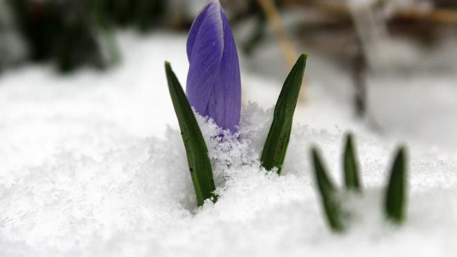 Весна прошла мимо: в Петербурге ожидается снег, дождь и гололед