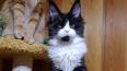 В Петербурге осудили россиянина, укравшего кошку Евангел...