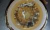 Фото ужасных червей из питьевой воды на Урале появились в Сети