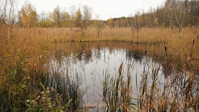 Недобросовестное предприятие превратило полянку в Колпино в зловонное болото