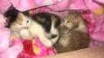 Жители дома на Димитрова пытаются пристроить котят, ...