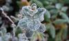 В ночь на 2 ноября в Ленобласти температура достигнет минус 13 градусов