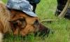 Собака унюхала гашиш в петербургской гимназии