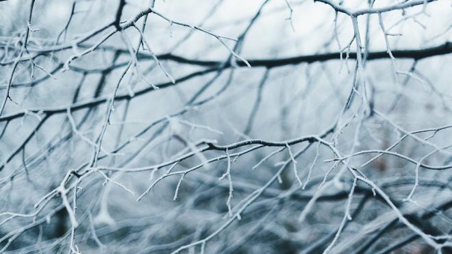 Петербуржцев предупредили о морозе и тумане в пятницу