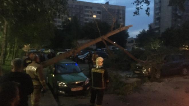 На улице Чудновского  упавшее дерево повредило два автомобиля