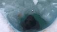 Нерпенок Крошик снял с себя и выложил на лед пластиковую ...