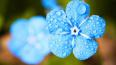 В среду в Ленобласти возможны кратковременные дожди