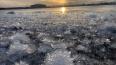 На берегу Финского залива в Петербурге распустились ...