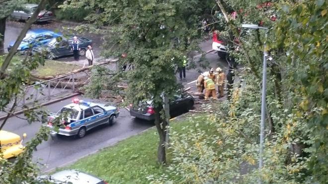 На улице Костюшко упавшее дерево полностью перекрыло проезжую часть