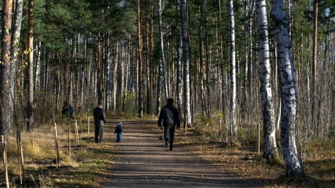 Пискаревский парк планируют реконструировать