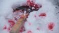 Петербуржец 26 раз ударил сожительницу по голове и после...