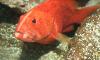 Две хищных рыбы из Шри-Ланки прибыли в Петербургский океанариум